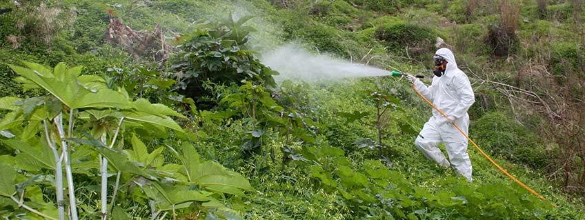 Fumigación de jardines Málaga