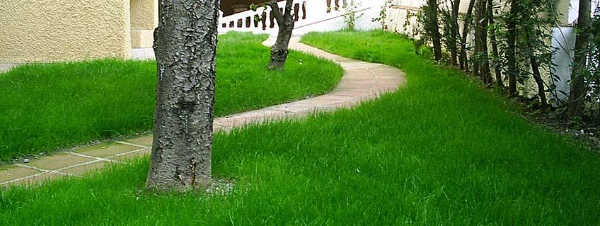 Profesionales de jardinería Málaga