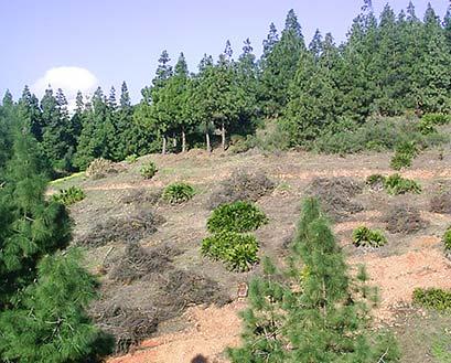 Silvicultura Málaga